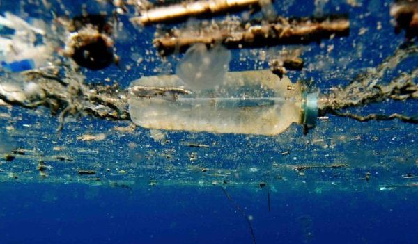 The Revolution in Waste Management: A Bacteria Devouring Plastic